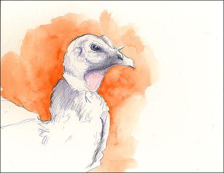 Sketches Wild Wild Turkey Sketch Using