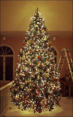 Tree8668