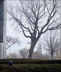 Trees9495