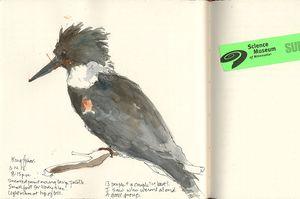 120614CKingfisher