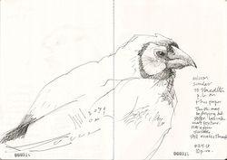 130924_B_Bird