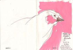 130924_C_Bird_Pink