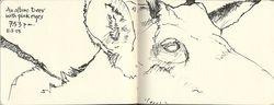131003_E_Albino-Deer
