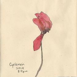 140317_Cyclamen
