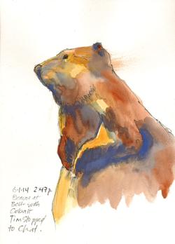 140601_B_BellMuseum-BeaverCobalt