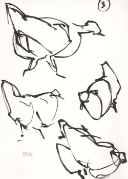 140713_03_Chickens