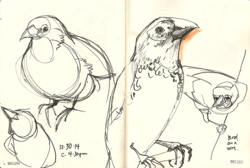 141230_Finches