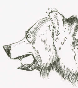 161204_b_grizzlyDetail