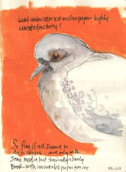 141231–PigeonTest